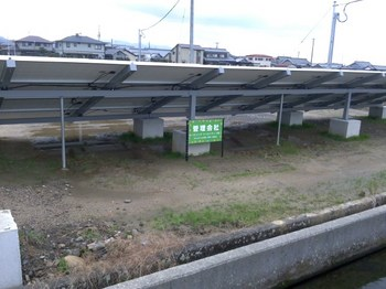 上高柳 (2).JPG