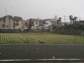 初雪 (1).jpg