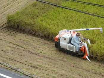 稲刈りh2510 (1).jpg
