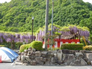 大三島のフジ祭り (2).JPG
