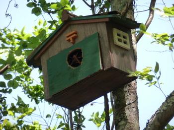 鳥の家 (1).JPG